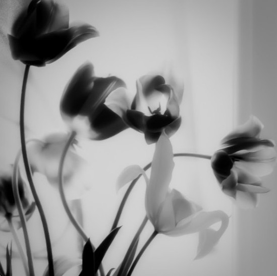 flowers, monochrome, black and white