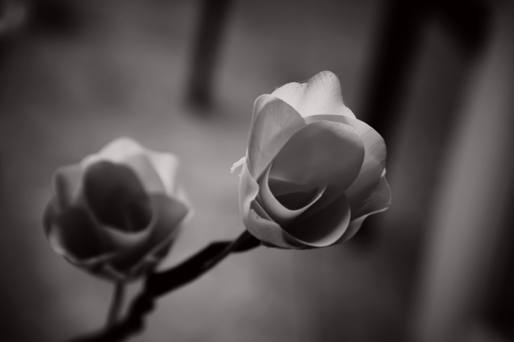 music,wood rose, flower, texture, black and white, monochrome
