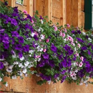 switzerland, flowers